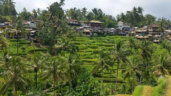 Bali Hike Jl. Kajeng Ubud