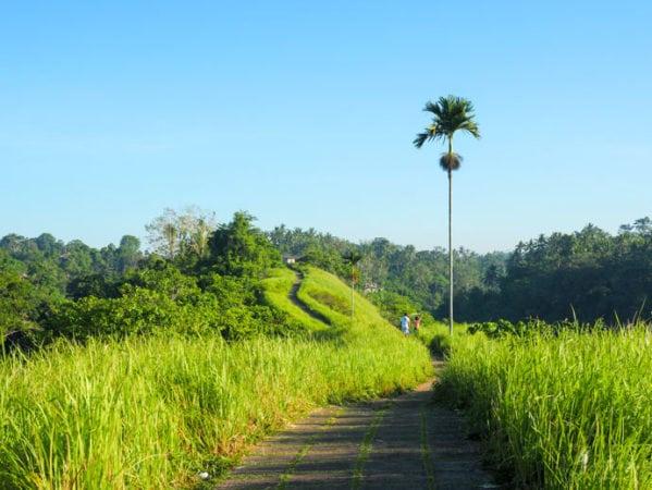 Bali Hiking Campuhan Ridge