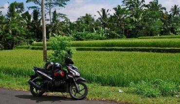 motorbike trip Bali