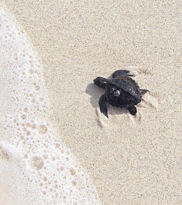 Turtle sanctuary on Gili Meno